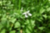 MF1904_032_TsuboSumire_.jpg