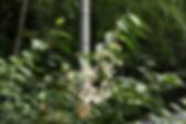 MF1907_03_Takenigusa.JPG