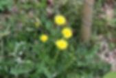 MF1904_030_Kantotanpopo_.jpg
