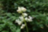 MF1907_09_Yabumyouga.JPG