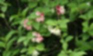 MF2005_06_Hakoneutsugi.JPG