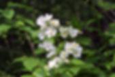 MF1905_16_Noibara.JPG