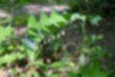 MF1904_028_Amadokoro_.jpg