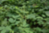MF1909_03_Kanamugura.JPG