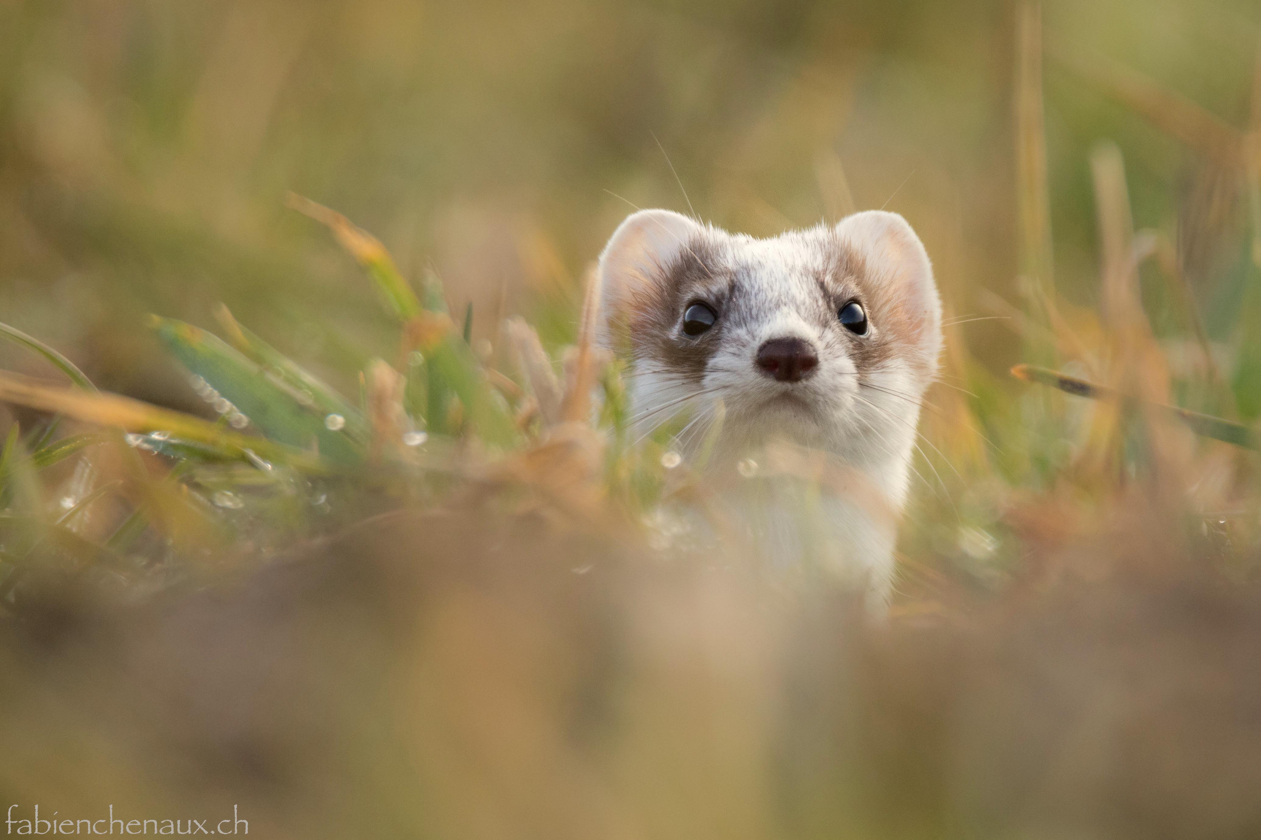 Un petit air de panda...