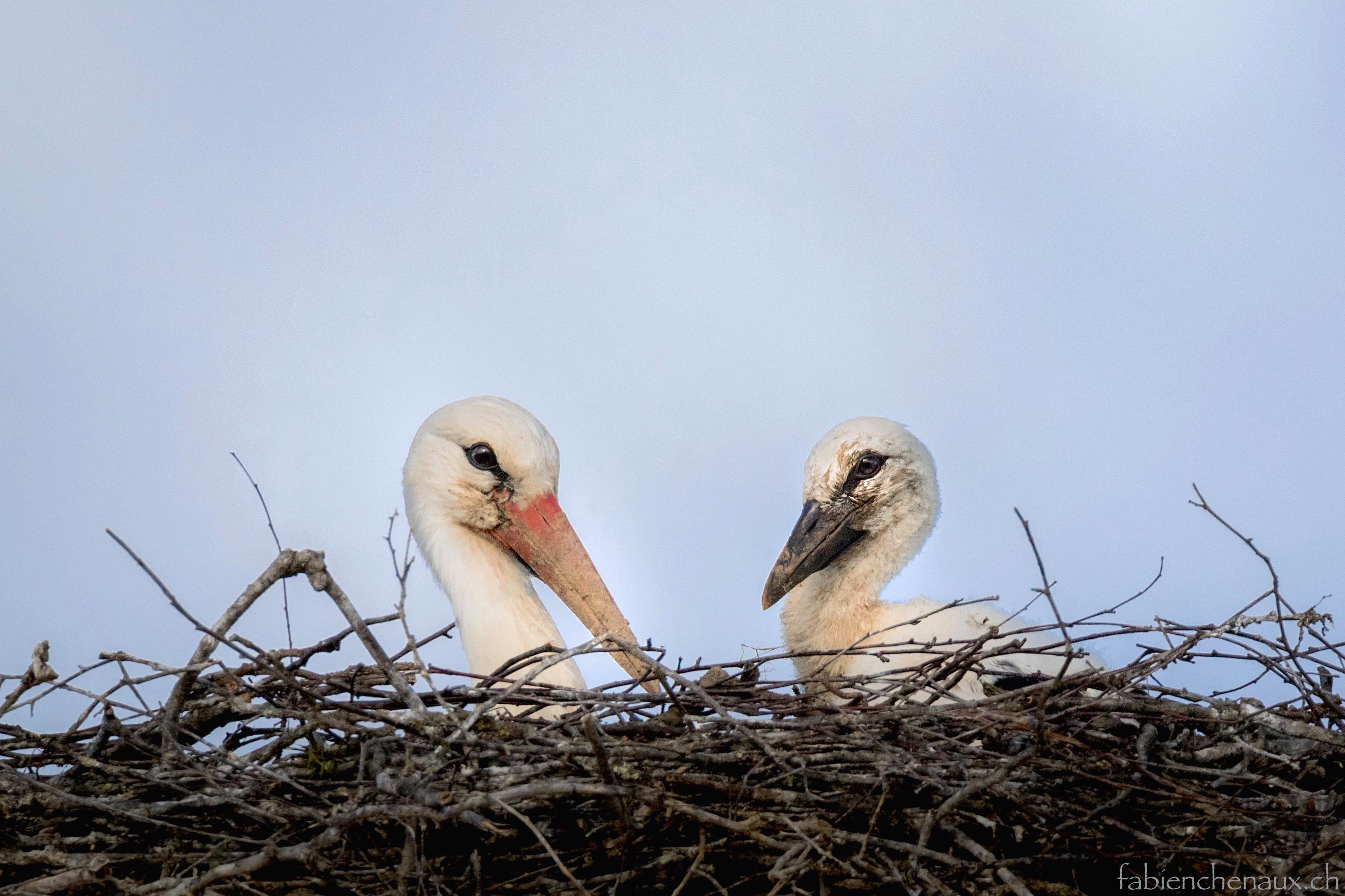 Dans le nid de Maman...