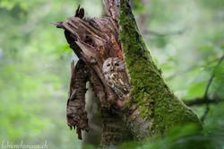 La belle de la forêt...