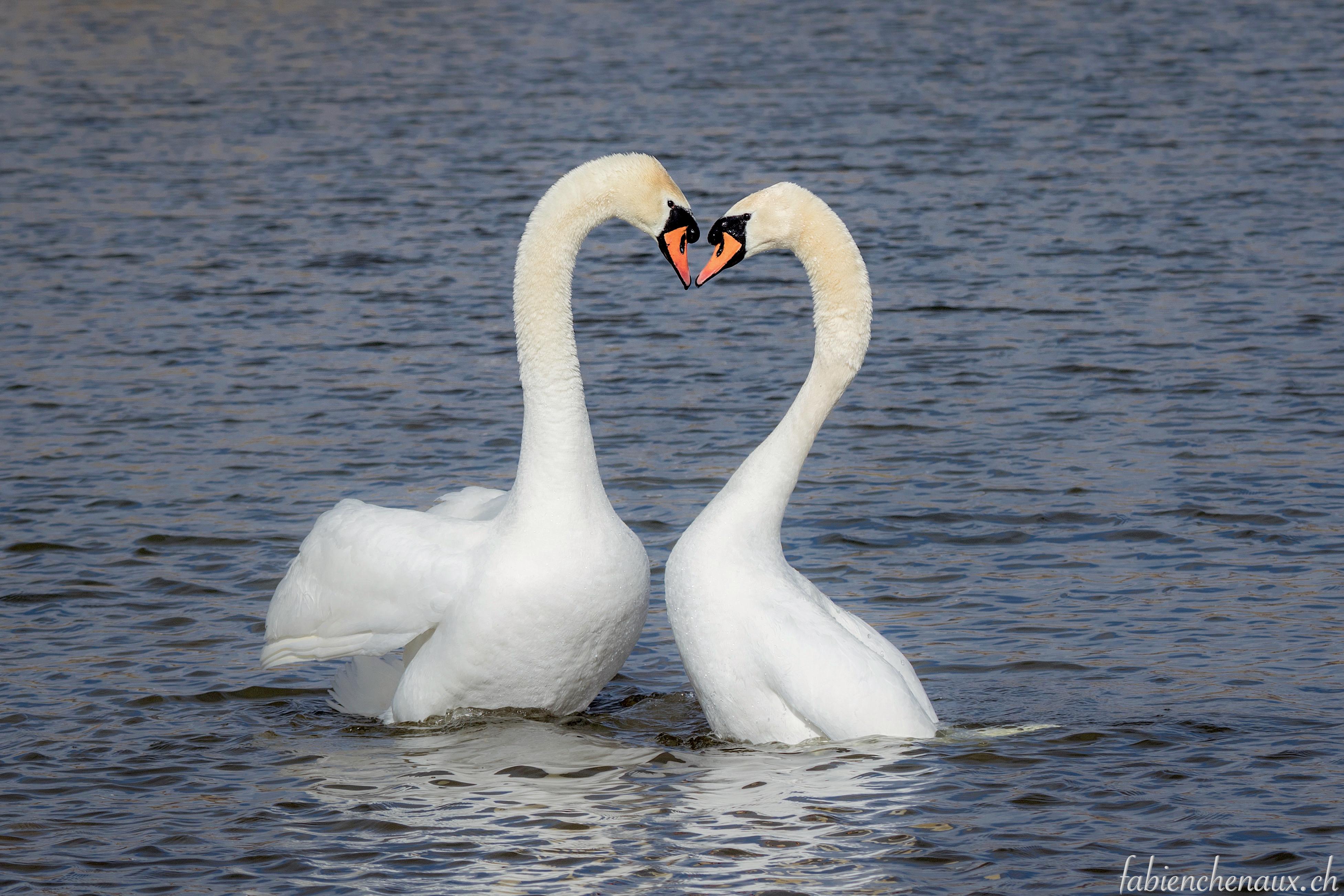 Au coeur de l'amour...