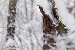 Coeur de forêt... VI
