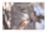 CalendrierA3FC2020-print-4 - copie.jpg
