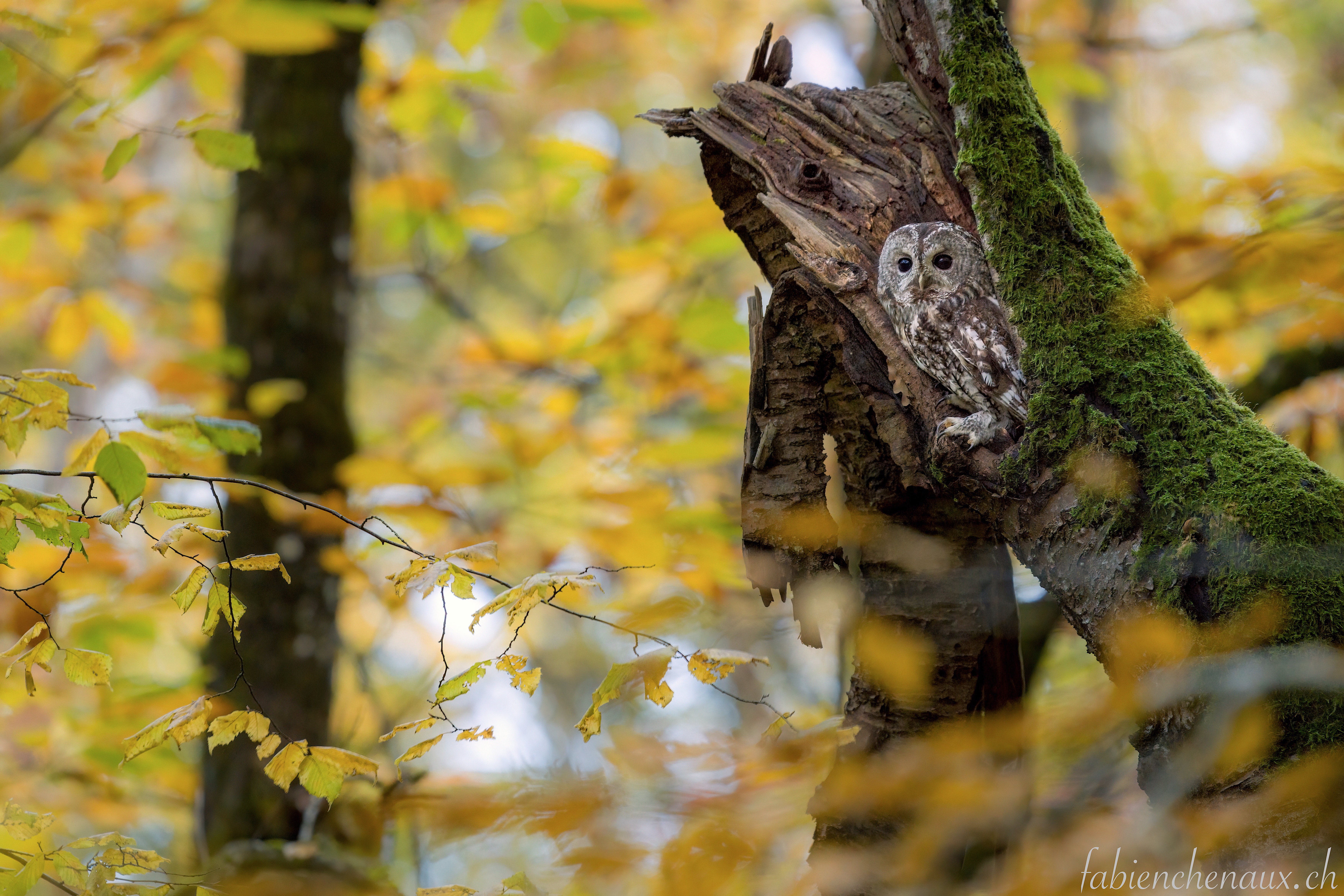 Coeur de forêt... V
