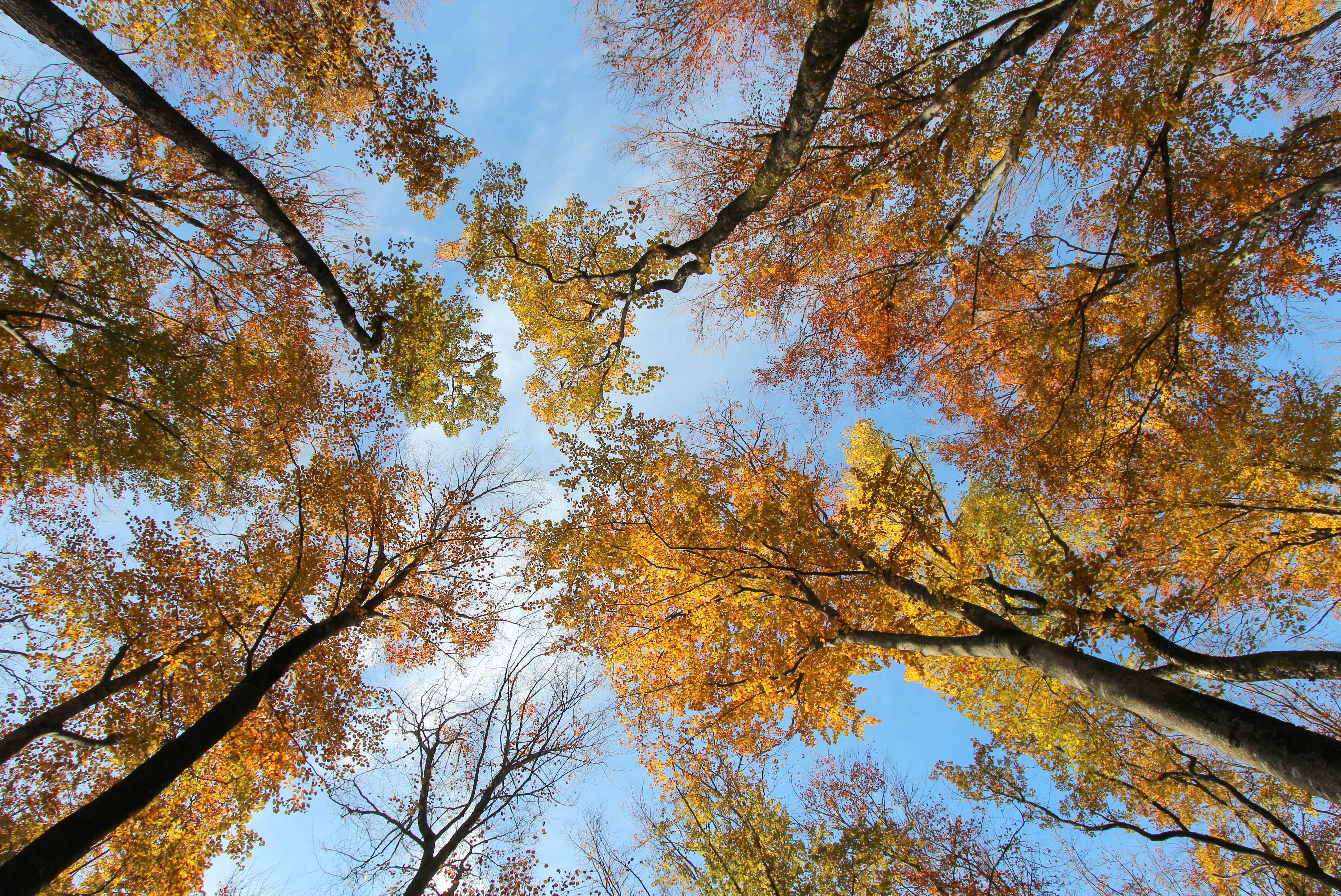 Couché dans les feuilles mortes...