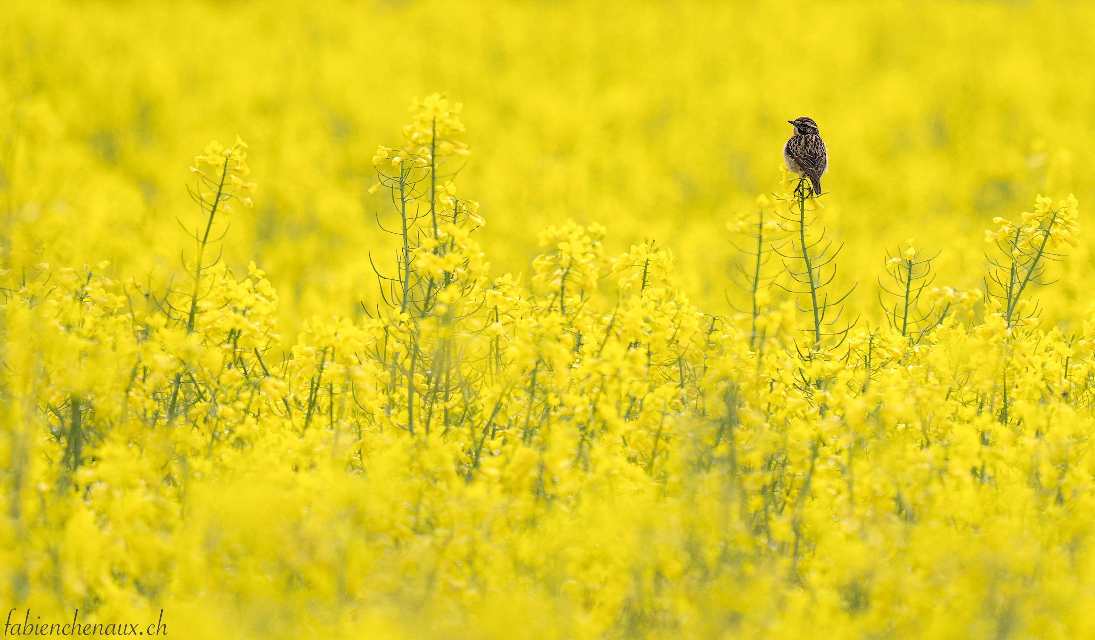 La vie en jaune... II