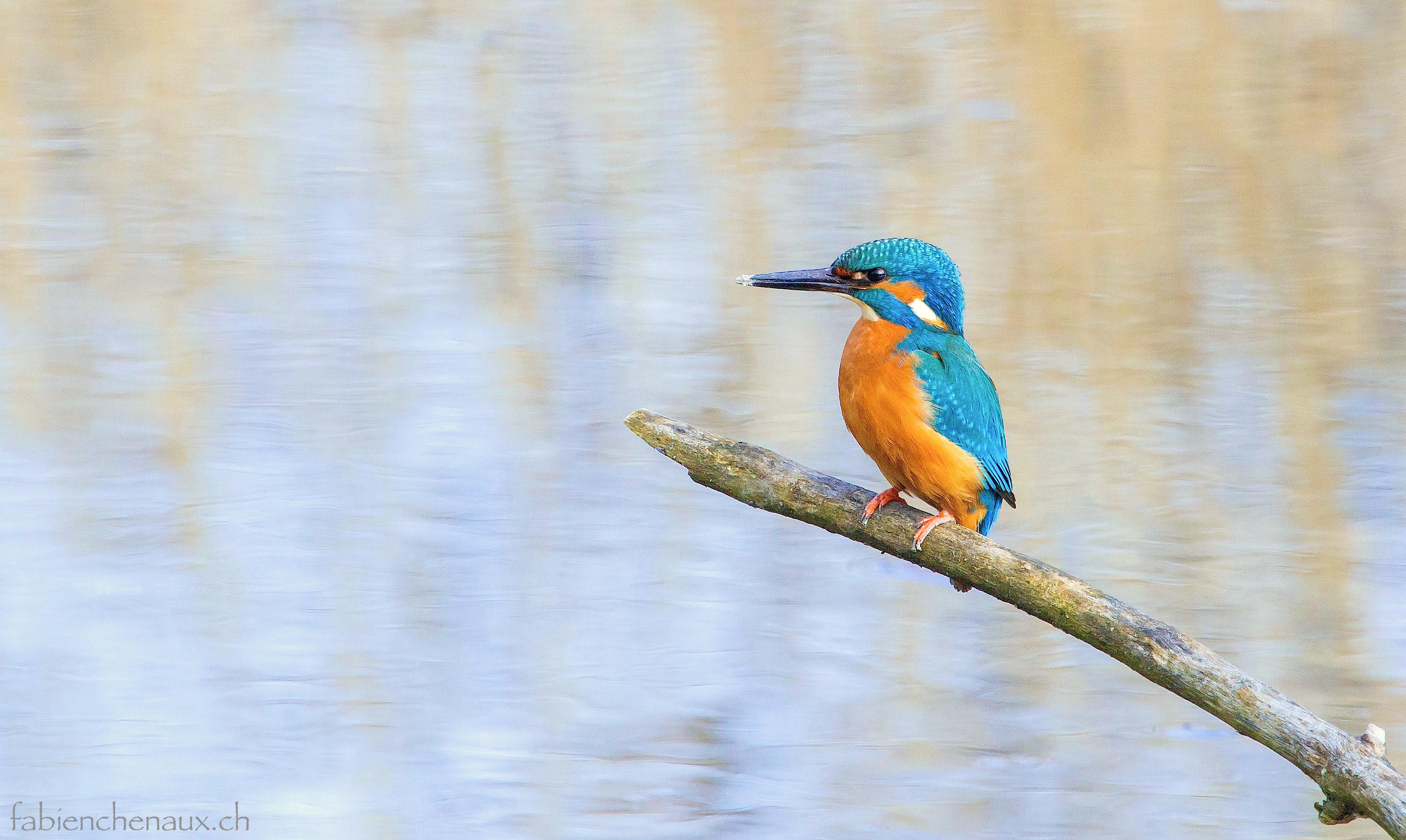 L'étang de la pêche...