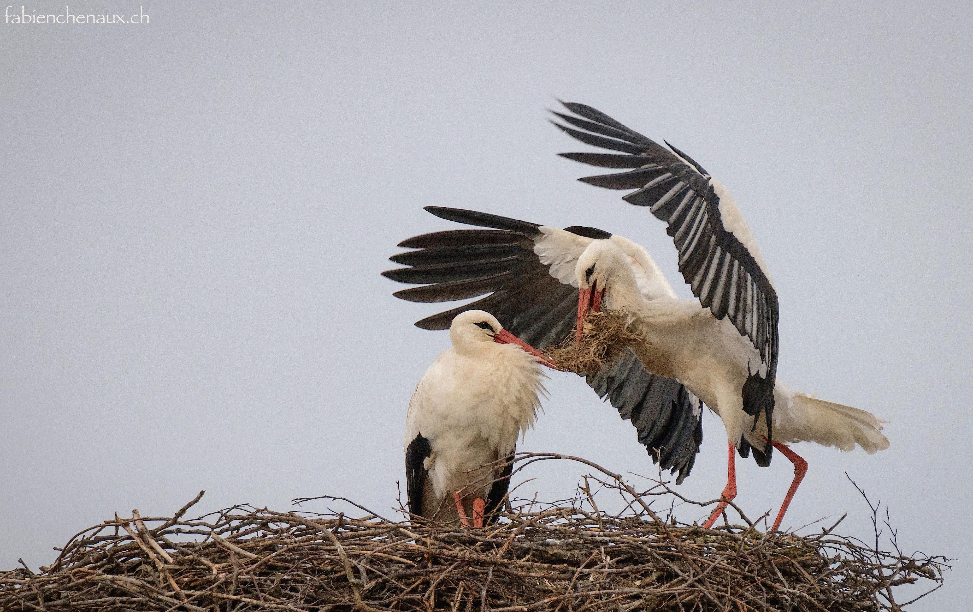Un douillet nid d'amour...
