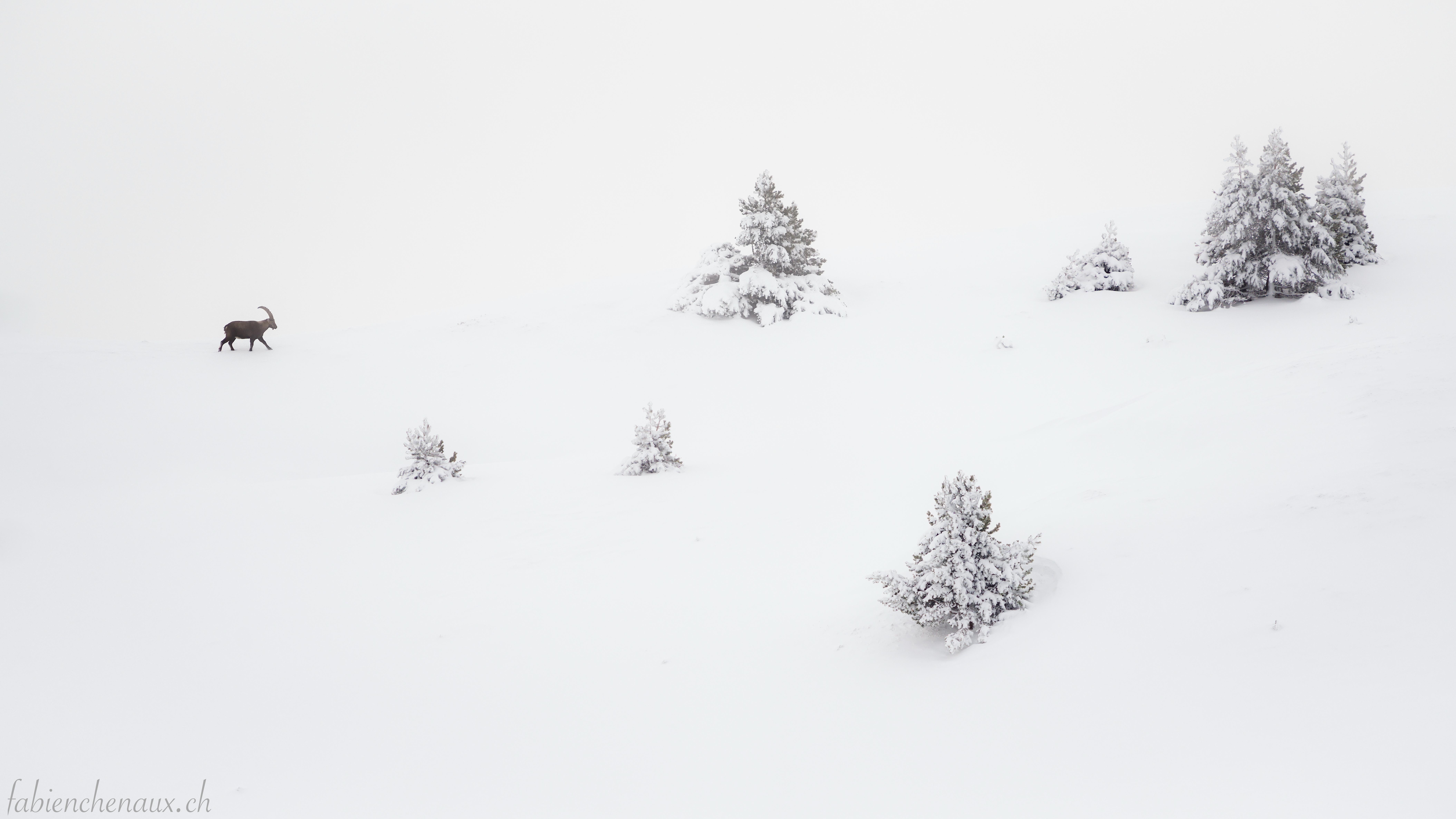 Le paradis blanc...