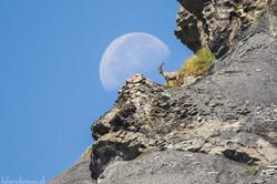 Jusqu'au sommet de la Lune...