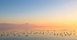 Une belle bande de canards...