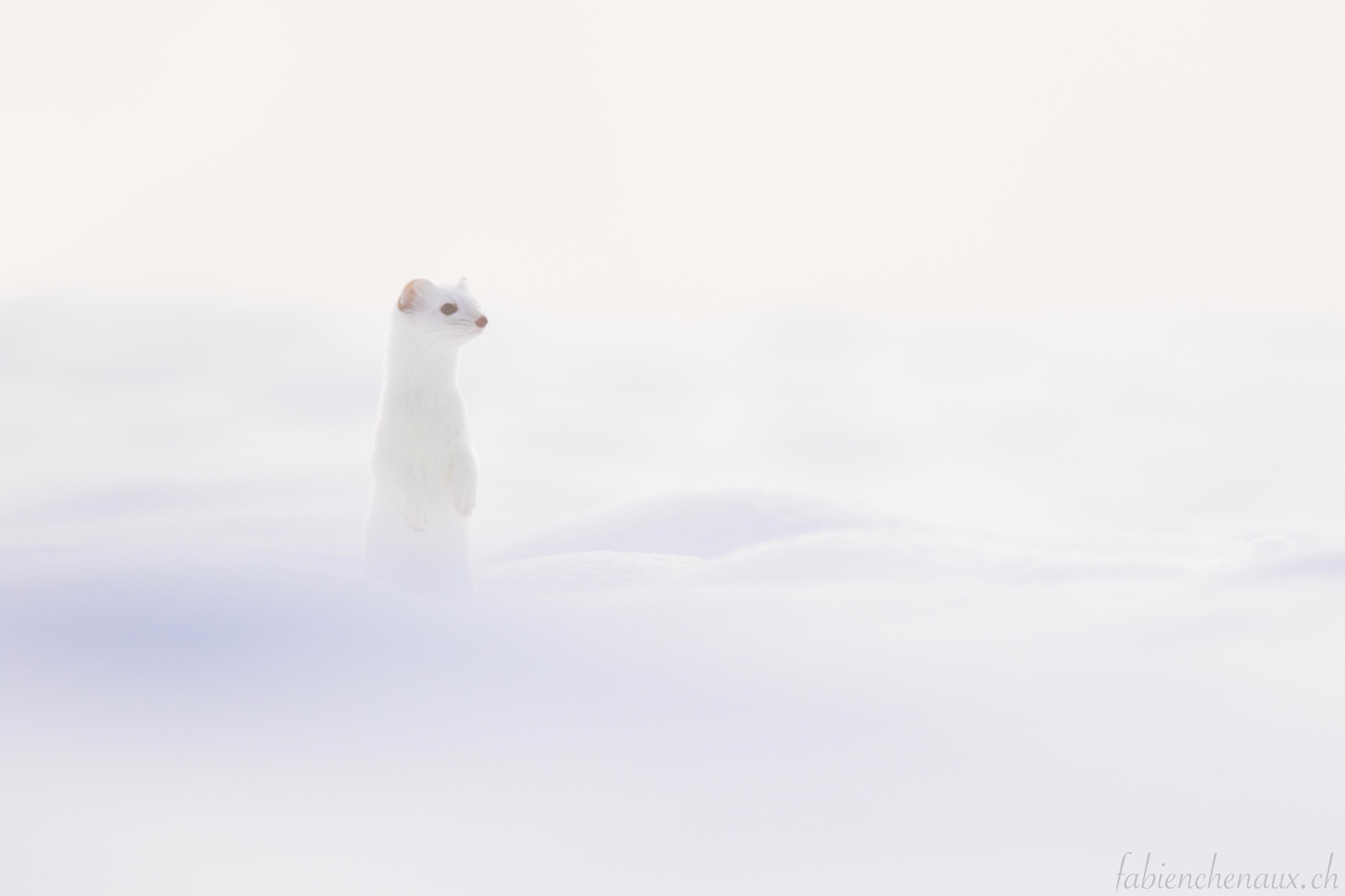 De neige et de brume...