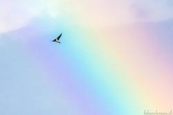 La traversée de l'arc-en-ciel...
