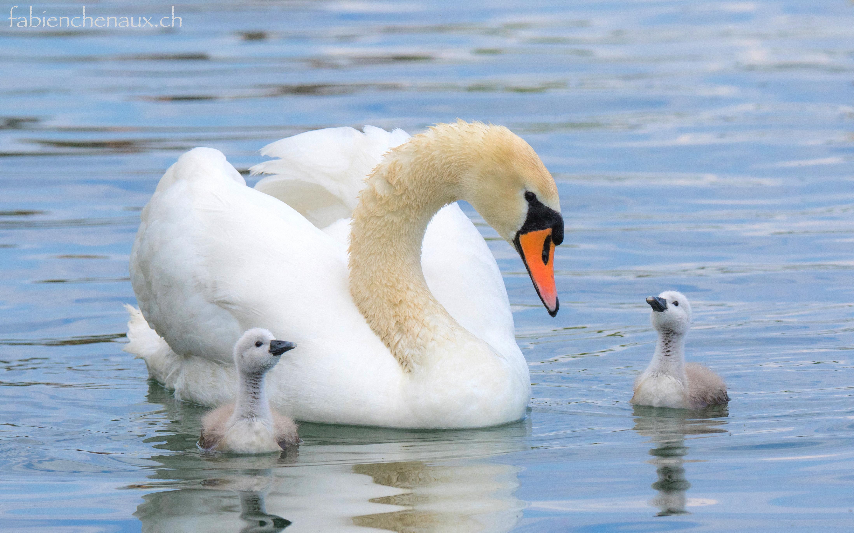 La fierté d'être mère... II