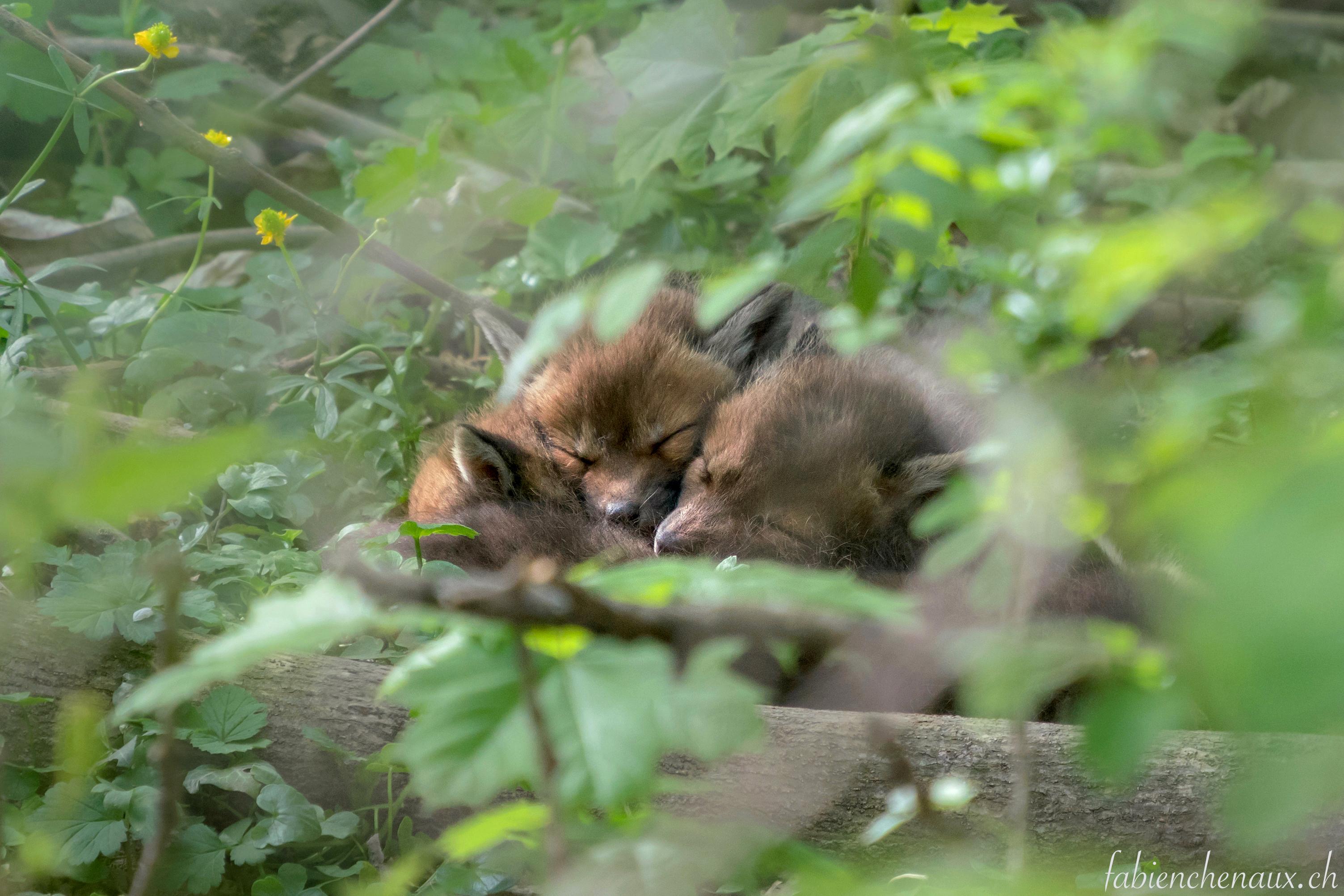 Dans l'intimité de la forêt...