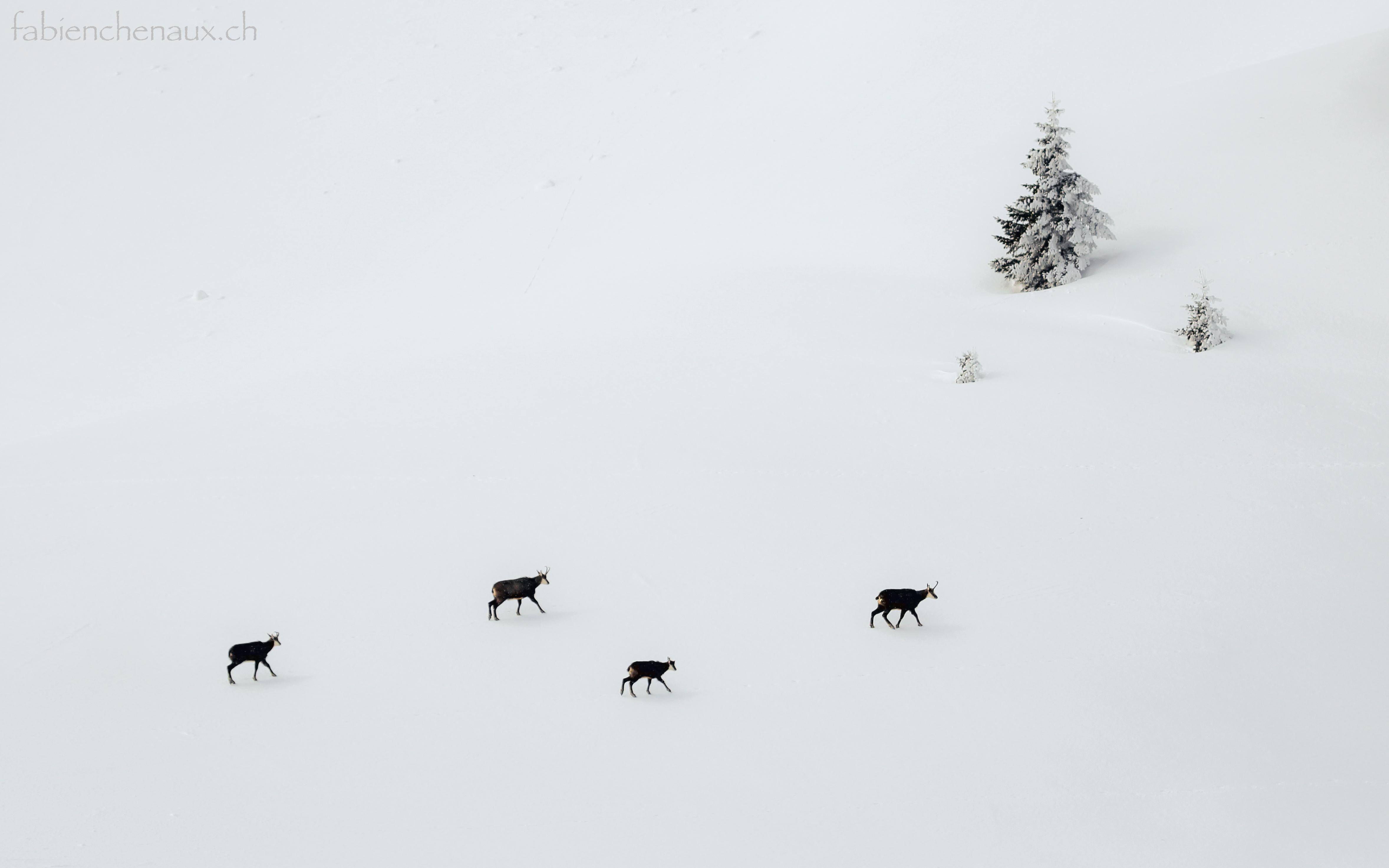 La traversée de l'hiver...II