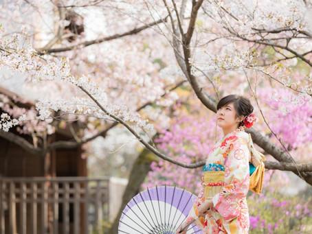 京都に春がきました