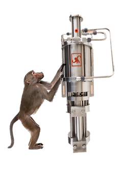 D50_baboon.png