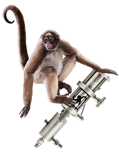 M15-SpiderMonkey.png