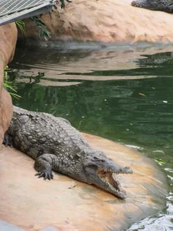 voyage la ferme aux crocodiles