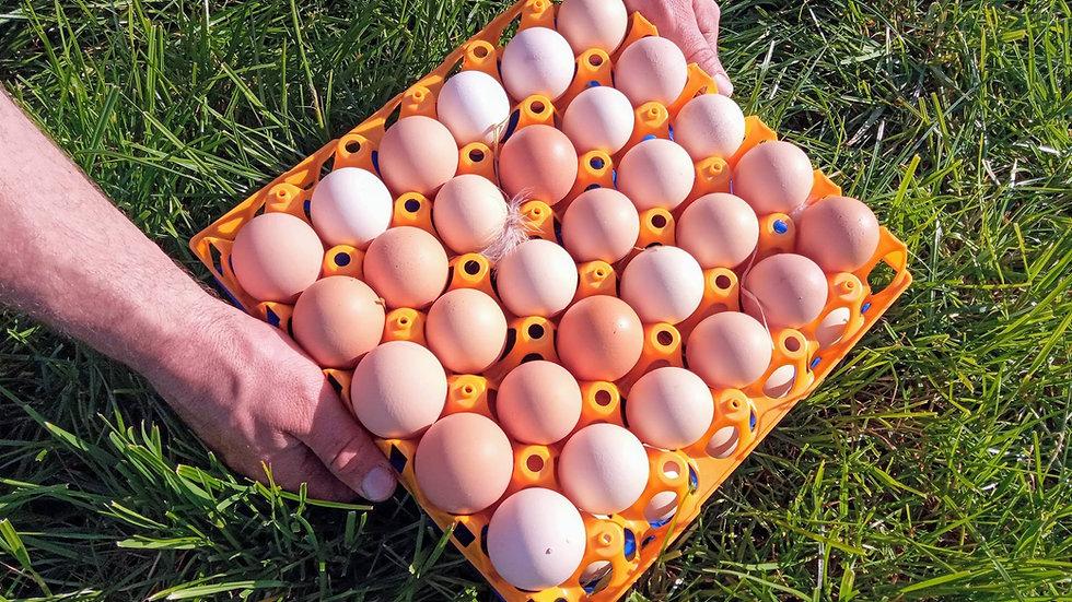 Hill Farm Real Food Eggs