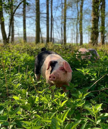 Magness Farms Pig.JPG