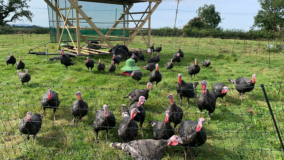 Nempnett Pasture Raised Turkeys