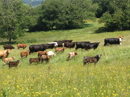 Reassessing efficiency in our food system.