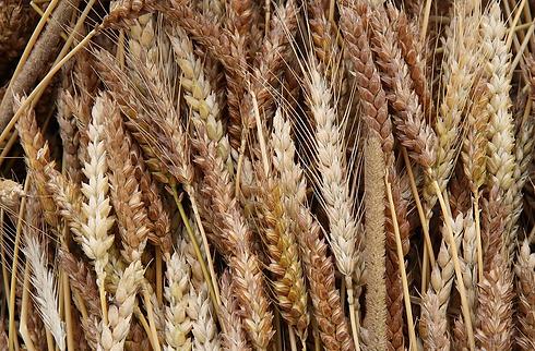 Heritage Grains.webp