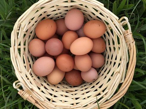 Eveshill Farm Eggs.jpg