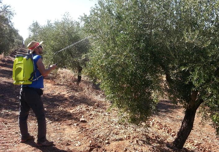 Imagen de los ensayos de aplicación de tratamientos en el olivar