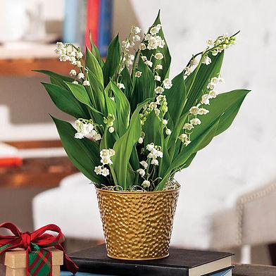 Pot de muguet, vase or végétal