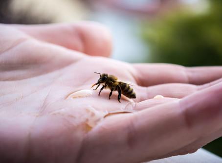 The First Impact.                        Der Erste Bienenkurs.