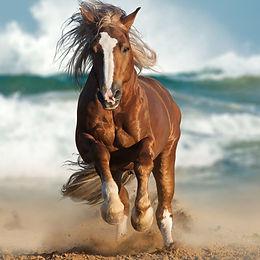 running beach.jpg
