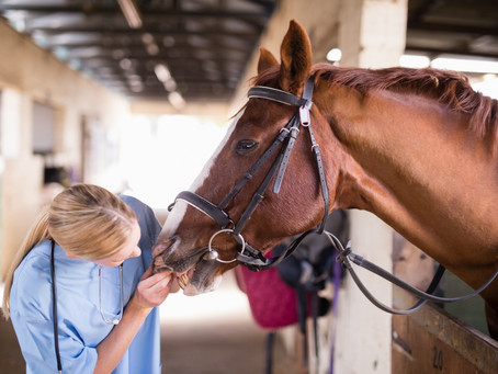 Is Equine Recoup a drug?