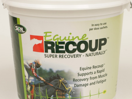 What is Equine Recoup?