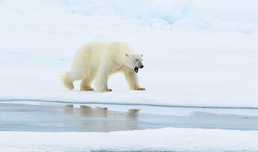Vortragsbild_Oceanwide Spitzbergen.jpeg