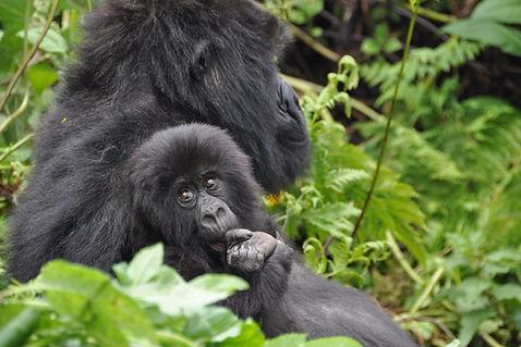 Vortragsbild_Ruanda___Uganda.JPG