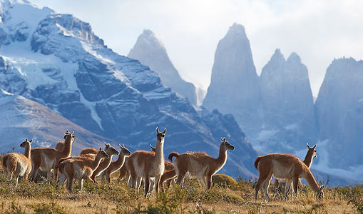 Argentinien_Chile_GettyImages-525495818_