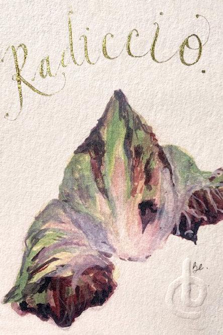 RADICCHIO fig.2
