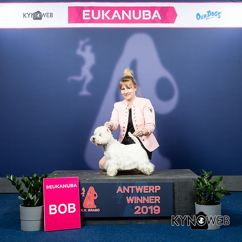 BEST_OF_BREED_512_LR_ANTWERPEN_2019_KYNO