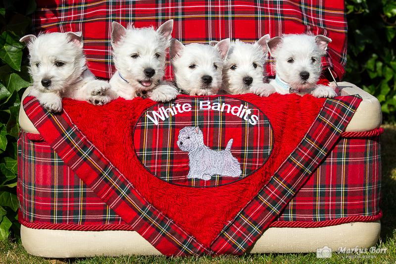 Jack, Merlin, Lenny, Maja, Johnny