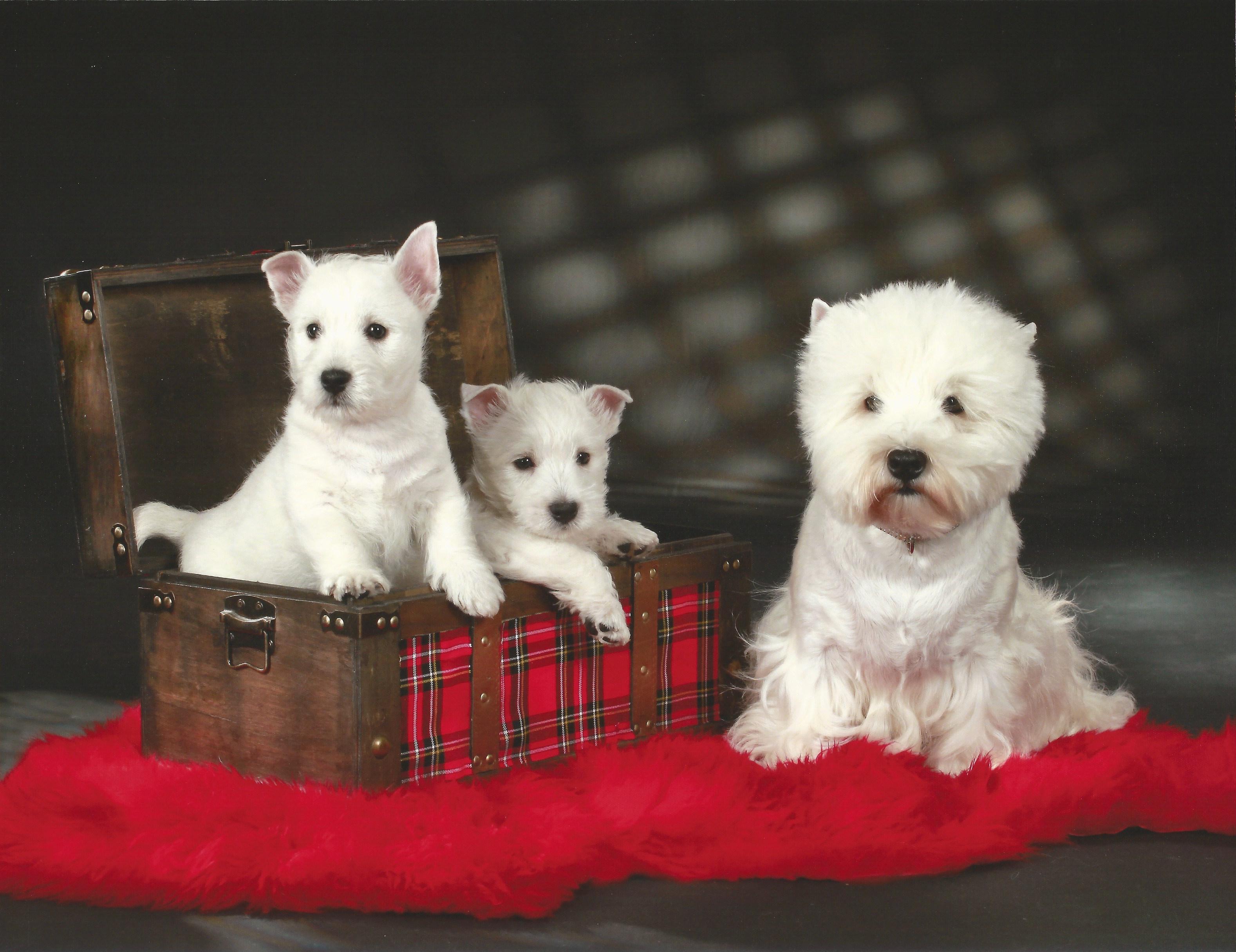 Linus, Louis und Pepper